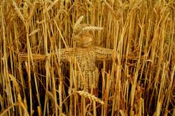Spirit of the Wheat Field