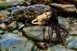 Cornish Sea Horse