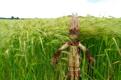 John Barley Corn Reborn