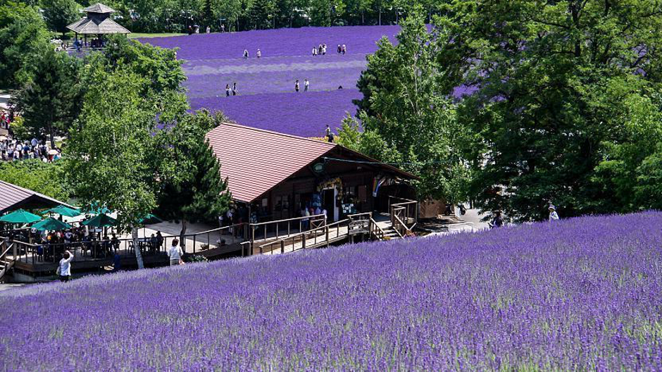Lavender over a rolling hill with tourists in the background at Farm Tomita Furano