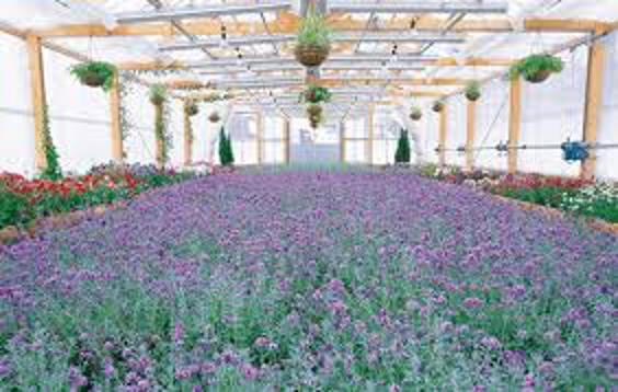 Farm Tomita Winter Garden