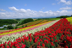 Shikisai-No Oka Flower Park
