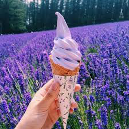 Photogenic lavender soft-serve ice cream in front of a lavender field