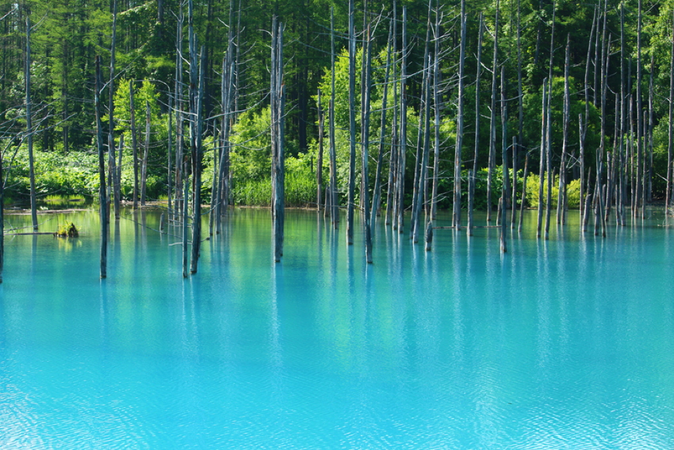 Apple Background - Famous 'Blue Pond'