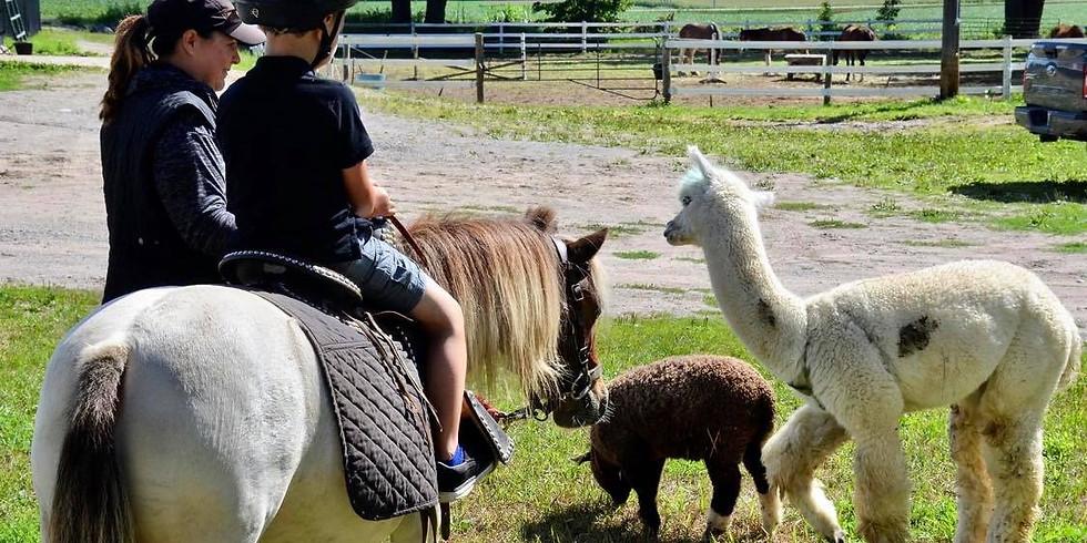 Pony Discovery Experience