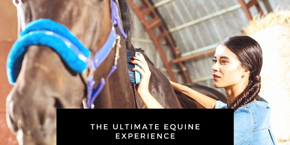 The Ultimate Equine Expereince