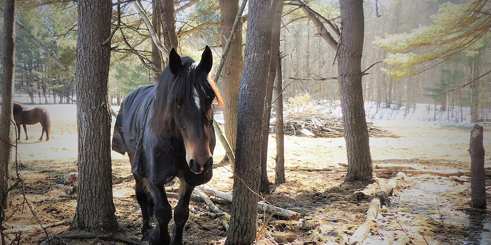 Equine Guided Forest Bathing