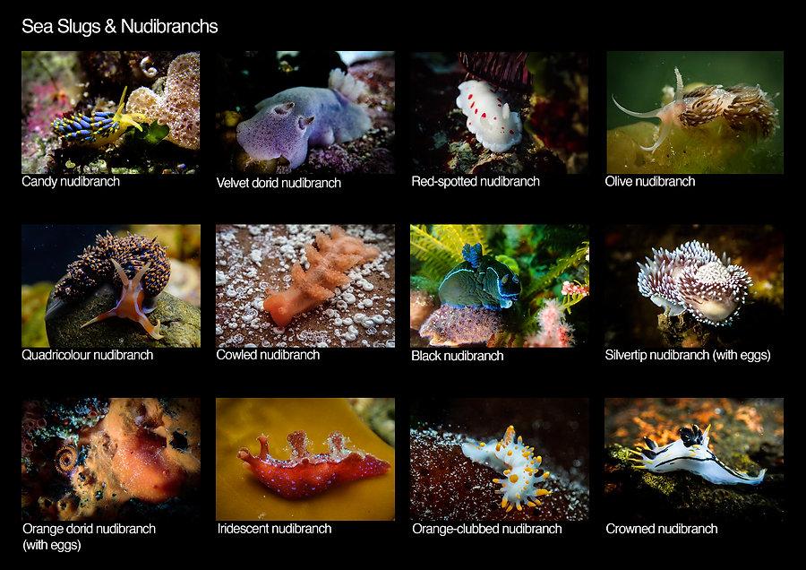 Cape Town Tidal Pools - Species List pag