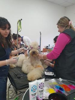 Clases Peluqueria Canina