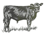 Angus%20calf_edited.png
