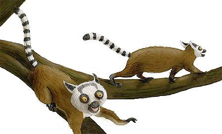 lemurs copy 2.jpg