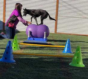 Fitness Dog.jpg
