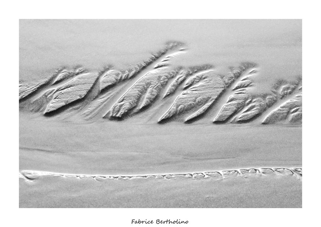 Forêt sur sable