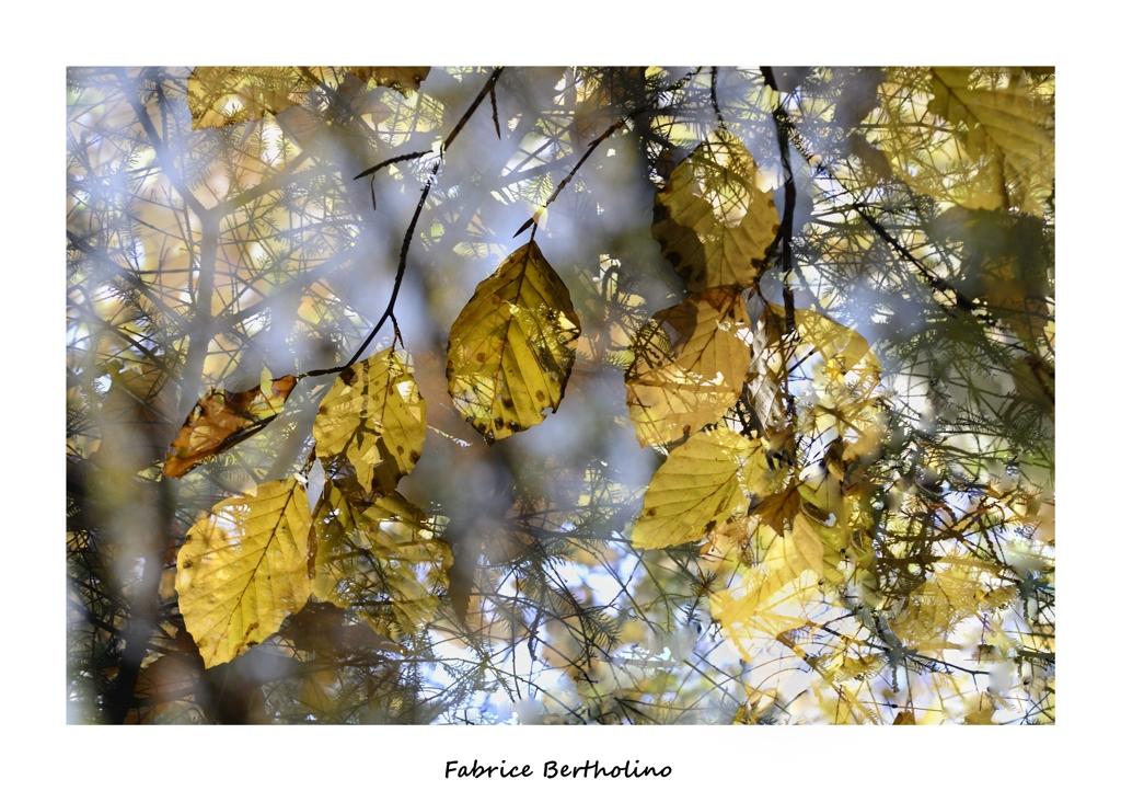 L'automne autrement