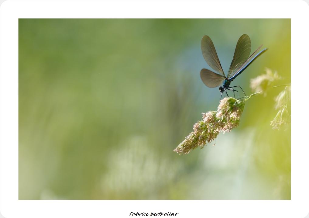 Mon insecte préféré !!!