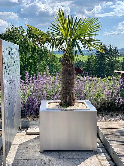 Blumentopf - Pflanzentopf - hochwertig - premium - Palme - Pflanzen
