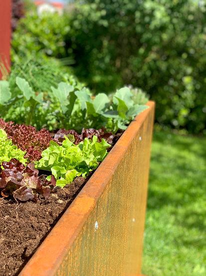 Pflanzen und Gemüse im Hochbeet; Cortenstahl