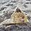 Thumbnail: Andara Crystal Pyramid (Large) SALE!
