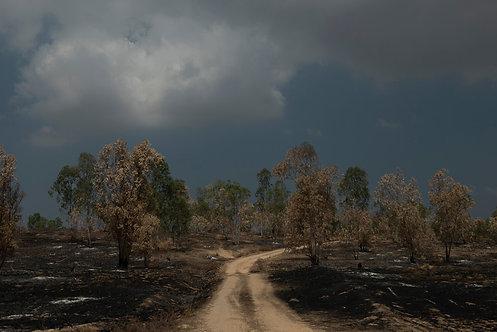Otef Gaza and the burning trees