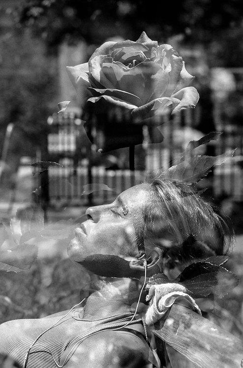 New York, The rose  By Jacob Elbaz