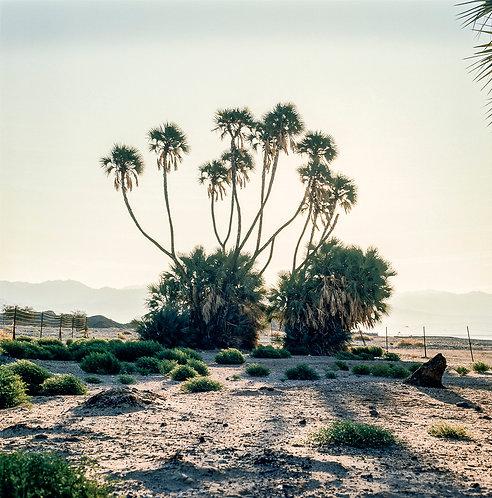 Israel, Sinai  By Jacob Elbaz