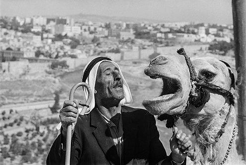 Jerusalem, Camel #1  By Jacob Elbaz