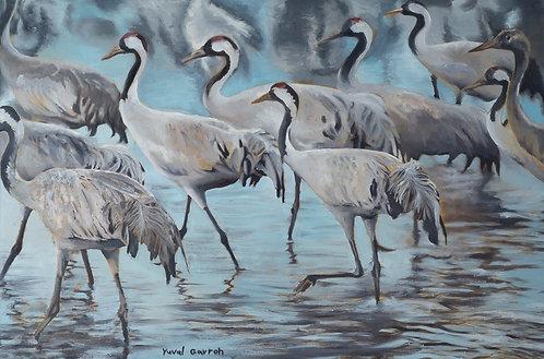 Cranes by  Yuval Gavron