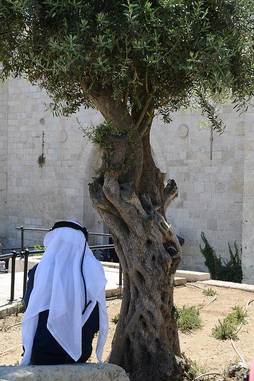 Jerusalem, Under his tree  By Jacob Elbaz