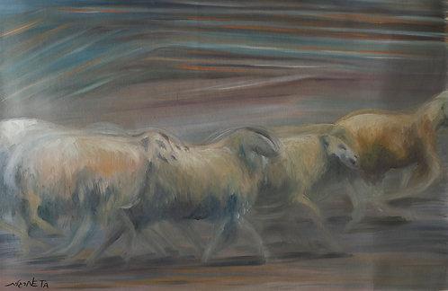 Sheep by  Neta Margalit