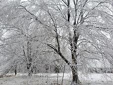 Winter Jan 2021.jpg