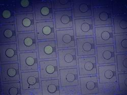 High Throughput chemotaxis chip