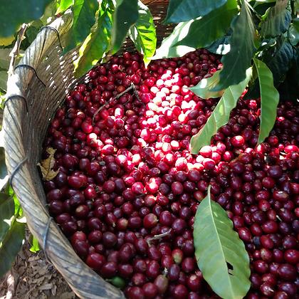 CAFE GRUMPY, El Salvador Malacara Red