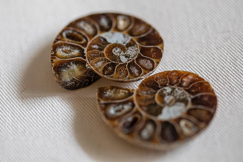 Coppia di Ammonite