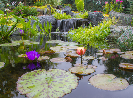 Tips For Keeping A Pond Clean