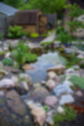 Clear Ecosystem Koi Pond