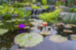 Aquatic plants in a ecosystem pond