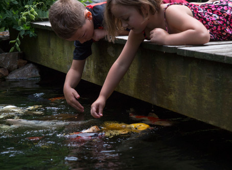 6 Tips For Feeding Your Fish