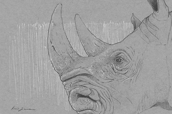 Rhino Sketch_Final.png