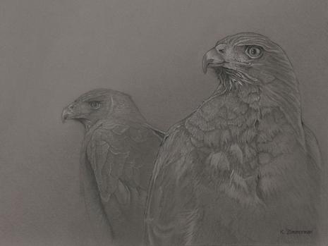 Harris's Hawks Print