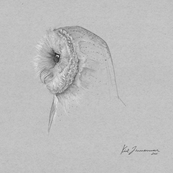 Barn Owl Sketch Print