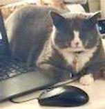 cats_edited_edited.jpg