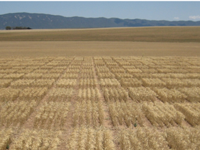 Reading - Grain on the blockchain: how digital supply chains are greening agriculture