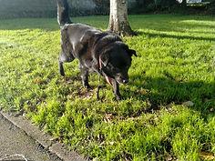 perte de poids canin