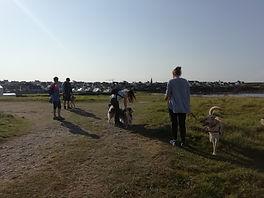 randonnée canine
