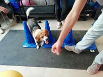entraînement sportif canin