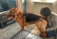 remise en forme canin