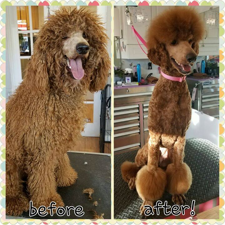 what a difference!#style #poodle