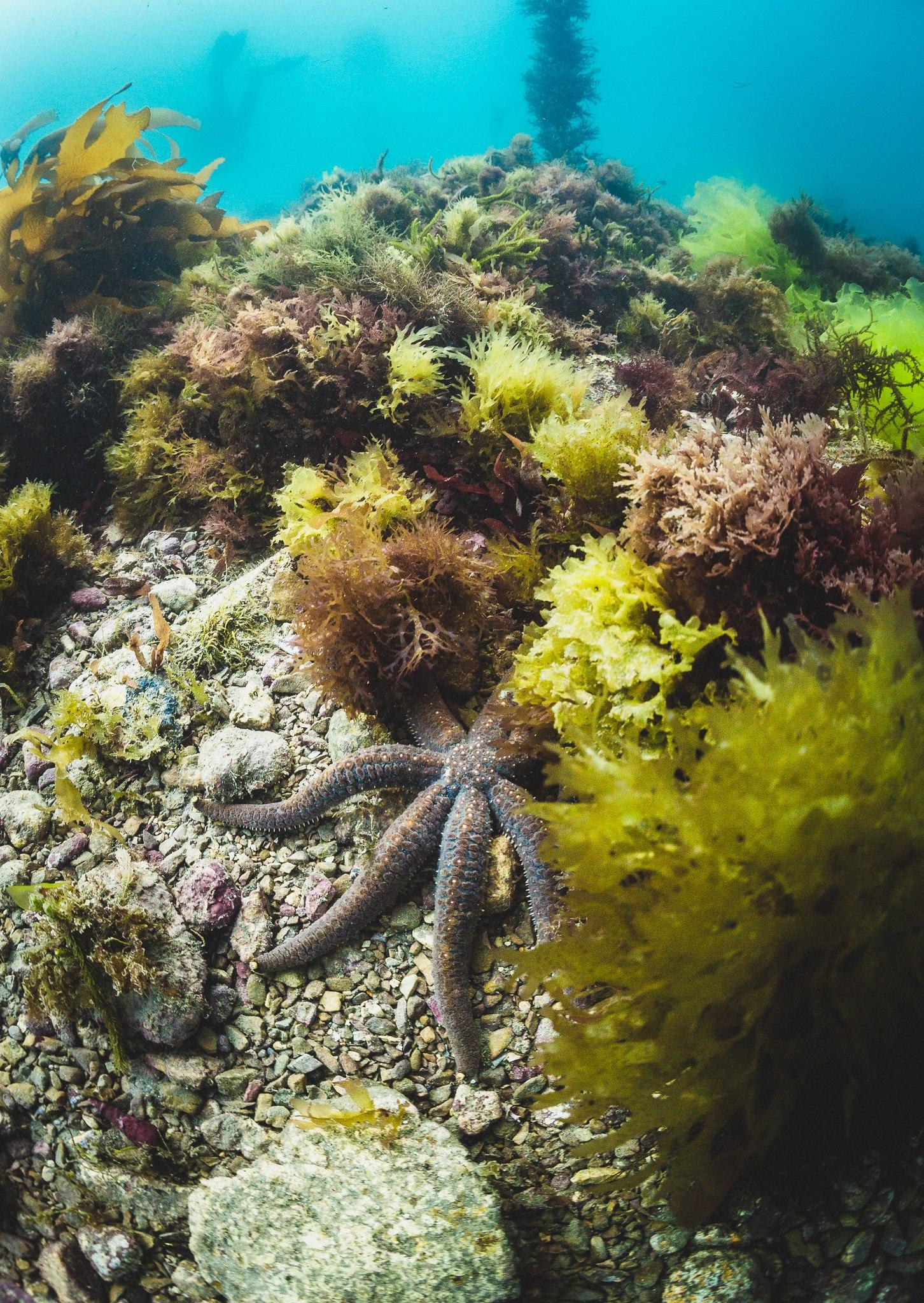 Hikurangi Marine Reserve