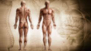 principios-de-la-osteopatia.jpg