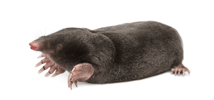 moles on white backround